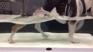 Ted Daniels underwater treadmill