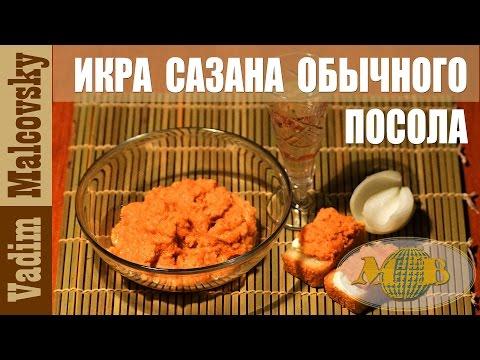 Как засолить сазана в домашних условиях быстро - Компания Экоглоб