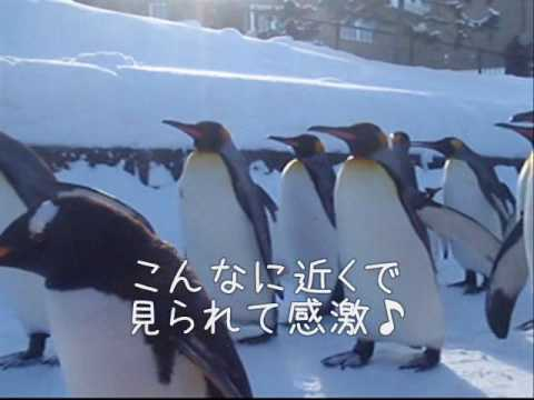 旭山動物園.wmv