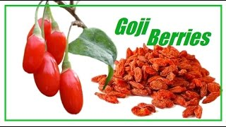 годжи Goji Berries Antioxidant vitamin C