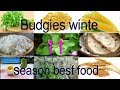 11 Budgies Winter Food / Birds Winter Best Diet / Budgies Parrot Breeding Formula