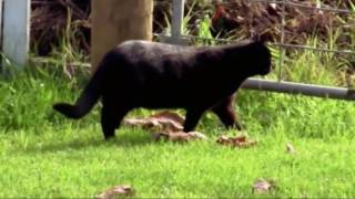 Fearless Cat Beats Up Dog - You Must Watch This Video