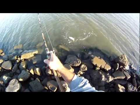 Halibut Fishing & Striped Bass Fishing with Lures & with my GoPro HD Helmet Camera & my Dobyns Rod.