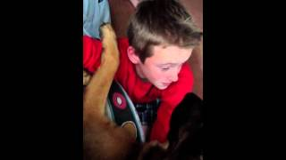 Dog licks the sick out of a boy