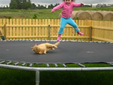 Thumbnail of video Trampoline Kitty