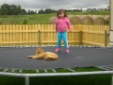 Cat on trampoline