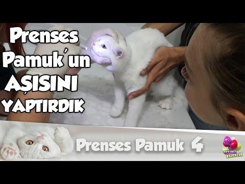 Prenses Pamuk 'un Aşısını Yaptırdık | Kedi | Prenses Pamuk #4