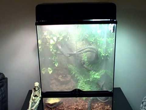 Vivarium Fogger made from a humidifier. DIY -