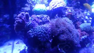 Peters monster reef aquarium