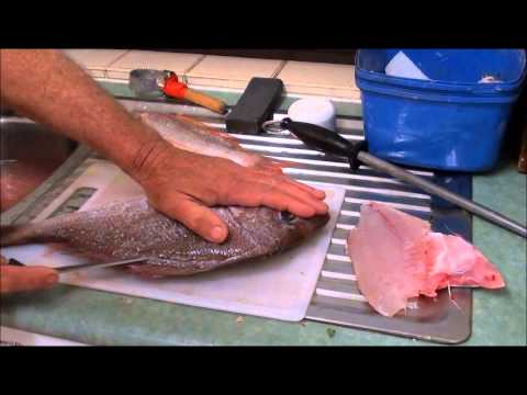 How to Gut,Gill & Fillet a RED / PINK SNAPPER - PORGIE.