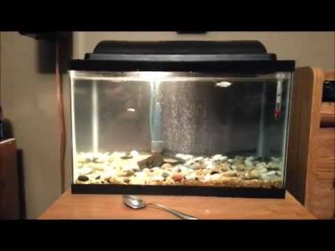 How to treat white spot curing ick ich in an aquarium for Ick in fish tank