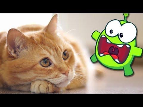 Om Nom Stories: Arrival Of Om Nom | Cat Fight | Cut The Rope | Funny Cartoons For Children