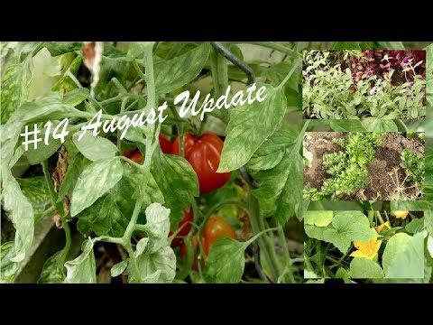Der Garten im August | Was ist gewachsen? | Trockenheit & Maulwurf |#14