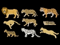 Big Cats - Animals Series - Lion, Tiger - The Kids Picture Show (Fun & Educational Learning Video)