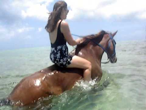 Grand Cayman Island - Pampered Ponies - Swimming Horses - August 2009