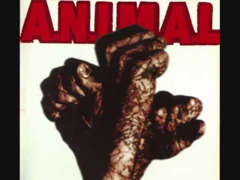 Animal - Amigos