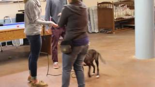 Training | Louie Puppy Training | Solid K9 Training Dog Training