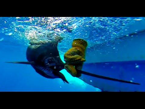 Go Pro: Costa Rica Sportfishing (Jacó/Playa Herrad