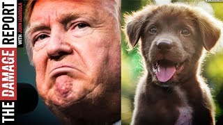 Trump Throws Dogs Under The Bus