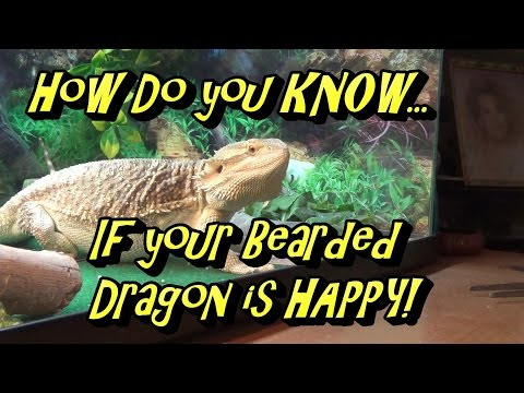 Dragon - If You Know