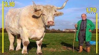 7 animais que CRESCERAM mais do que deveriam #04