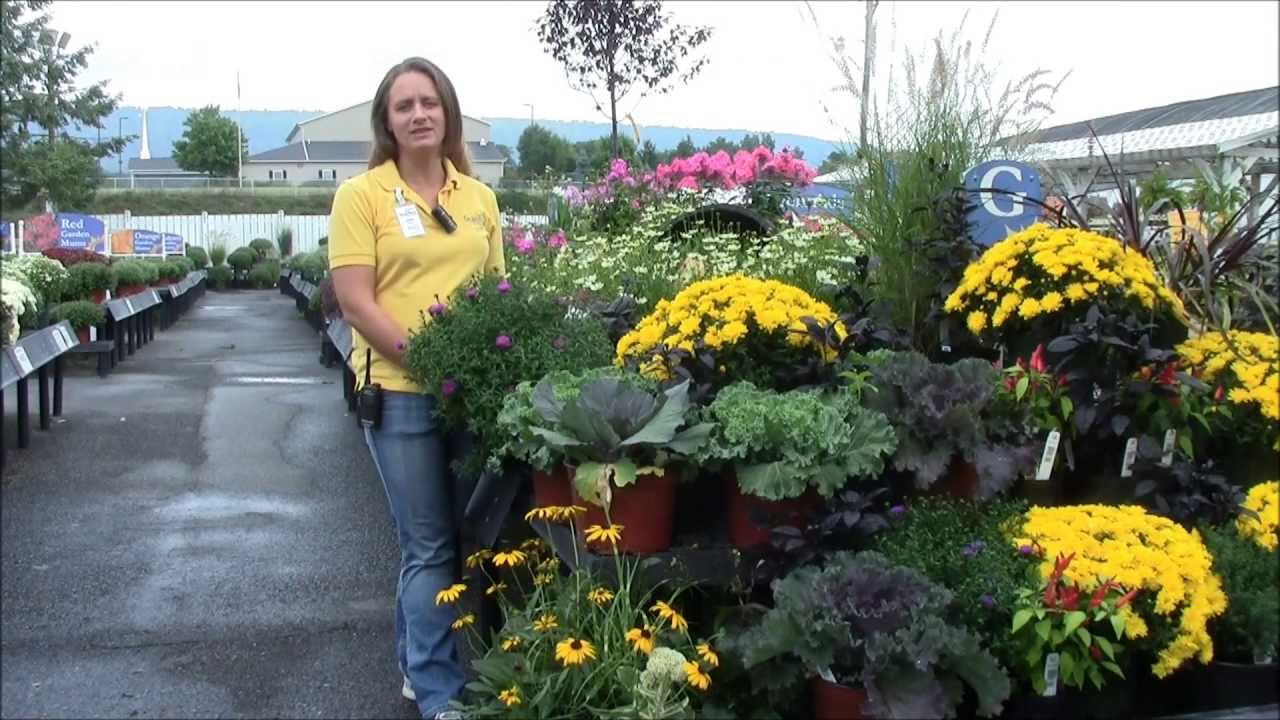 caring for asters with stauffers of kissel hill youtube