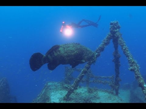 Freediving the Spiegel Grove - The Amazing Dives of the World - Wrecks