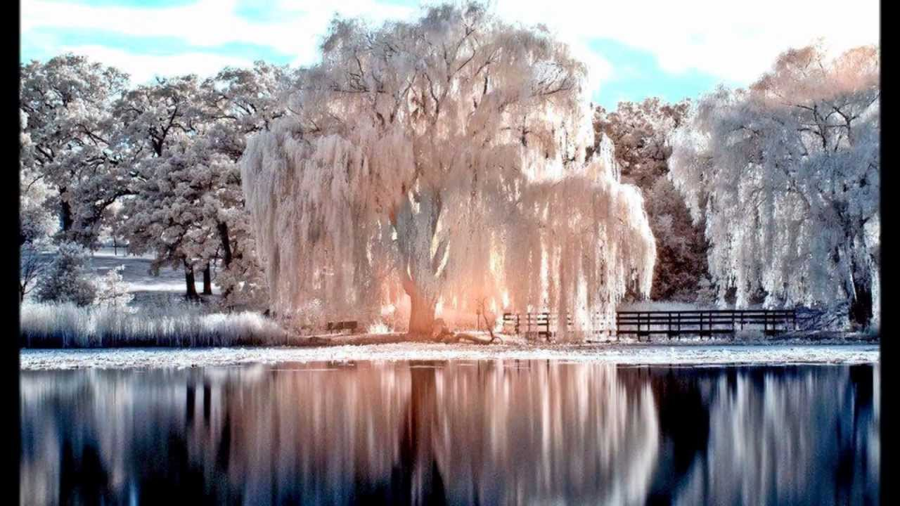 Filmato meravigliosa natura sulle note di richard for Immagini natura gratis