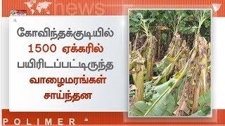 திருவாரூர் மாவட்டம் கோவிந்தக்குடியில் 1500 ஏக்கரில் பயிரிடப்பட்டிருந்த வாழைமரங்கள் சாய்ந்தன
