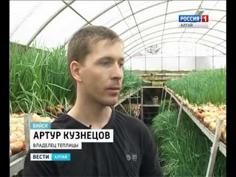 Житель Алтайского края построил под землёй теплицу для выращивания лука