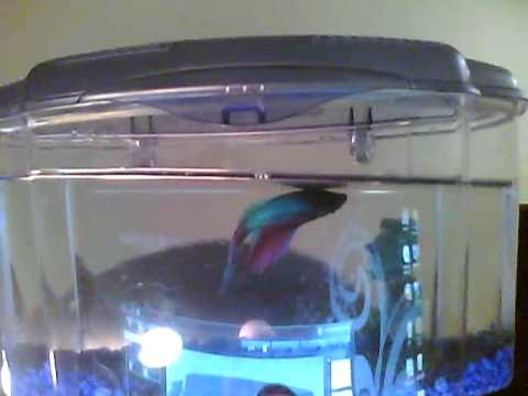 Long Betta Fish Live on Announcing The Finalists Of The Seattle 2 0 Awards 2010 And Keynote
