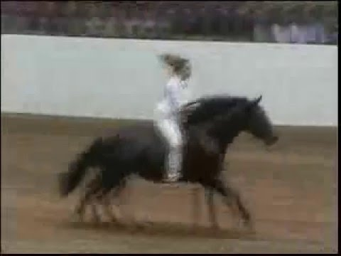 Bareback riding WITHOUT reins performed by Stacy Westfall