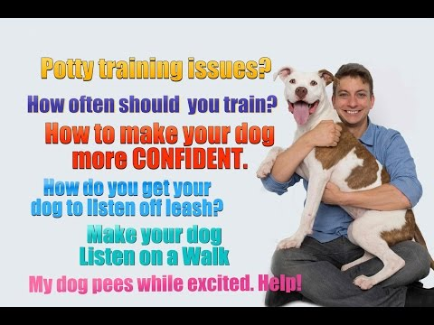 6 Dog Training Questions YOU Probably Don't Know the Answer to (potty training, off leash...)