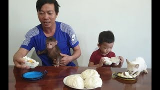 Baby Monkey | Monkey Doo And Cat Miu Eat Dumplings With Family