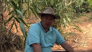 kou thaij movie