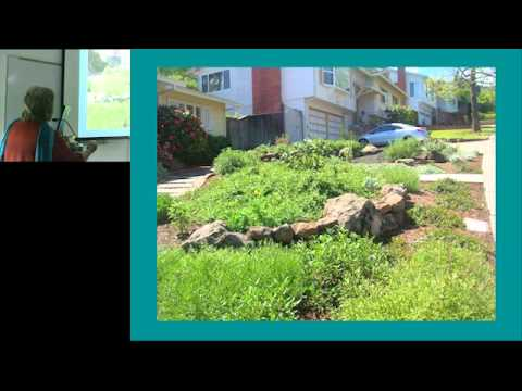 Converting a Lawn to a Native Plant Garden 2