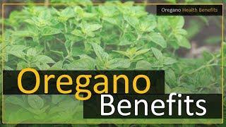 Oregano Leaves Health Benefits