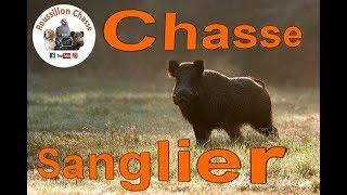 Chasse au sanglier en battue - un tir pas facile - hunting wild boar in driving hunt
