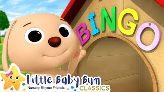 BINGO Song | Nursery Rhymes and Kids Songs | Baby Songs | Little Baby Bum