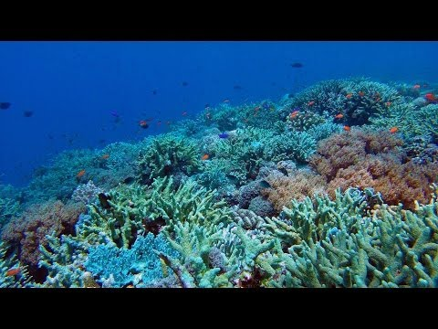 Tubbataha Reef Diving via Expedition Fleet Oceanic Explorer [GoPro HD]
