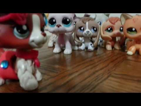 Lps New Pets with Collie 58 paws down!!! WATCH!!