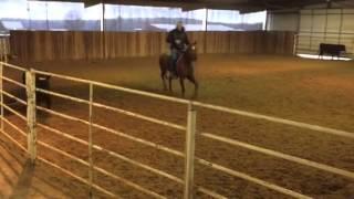 Fancy- Jared Lesh Cowhorses
