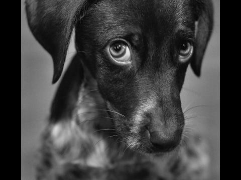 Funny guilty dog (виноватые собаки которым стыдно)