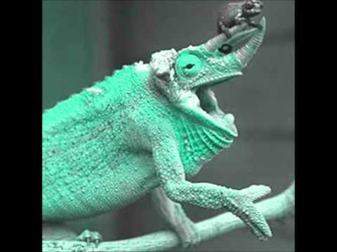 Dave Barnes Chameleon.wmv