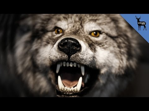 Why Do People Think Werewolves are Real?