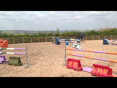 16.2 Irish Sports Horse,  Gelding, 6 Years old FOR SALE