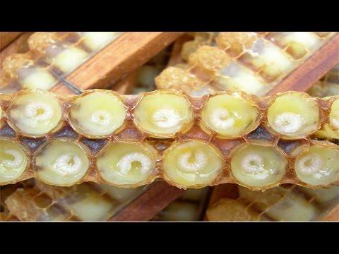 Curso Produção de Pólen e Geleia Real - Produção de Geléia por Puxada Natural