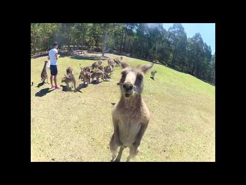 The Australian Way of Life : One month in Sydney