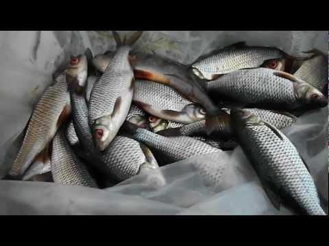 рыбалка в грибановке