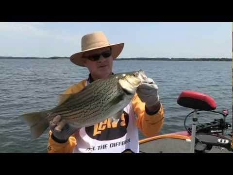 Lake Palestine TX Hybrid Striper Fishing SNEAK PEEK PREVIEW